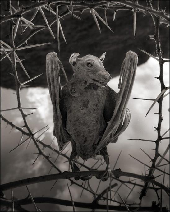 Morcego. © Nick Brandt 2013,  Hasted Kraeutler Gallery, NY